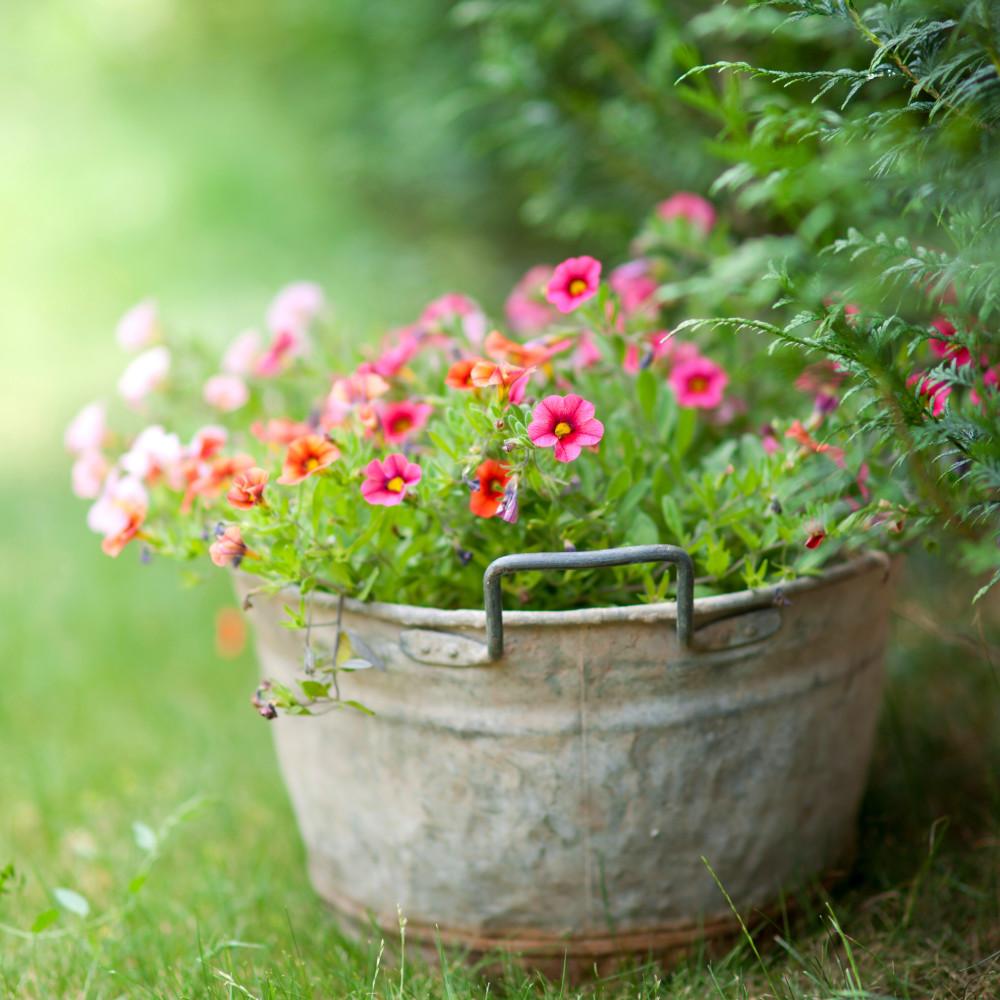 Amanti del Verde con il Container Gardening
