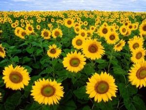fiori11_1024